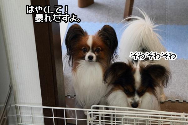 2011_12_23 ご飯DPP_0011