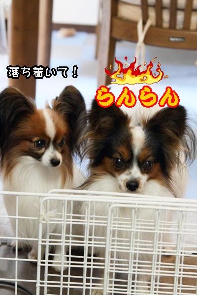 2011_12_23 ご飯DPP_0009