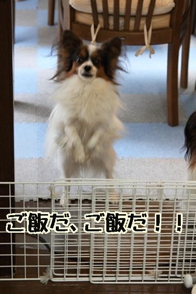 2011_12_23 ご飯DPP_0017