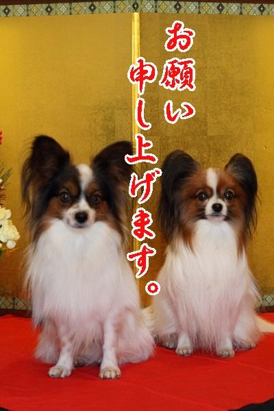 2011_12_31 お正月DPP_0014