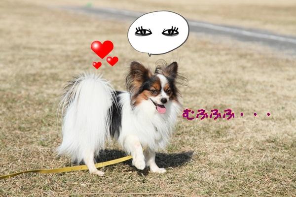 2012_01_04 ガス橋 ブログサイズDPP_0039