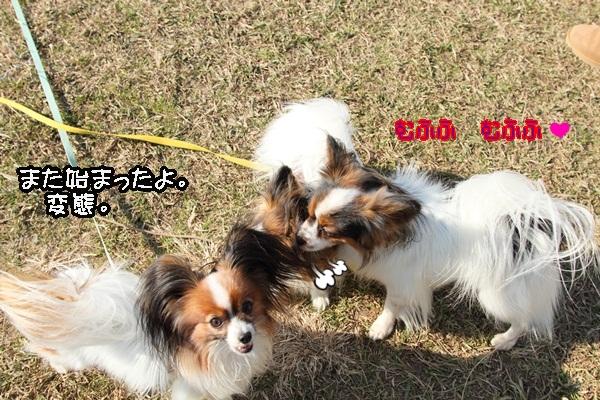 2012_01_04 ガス橋 ブログサイズDPP_0088