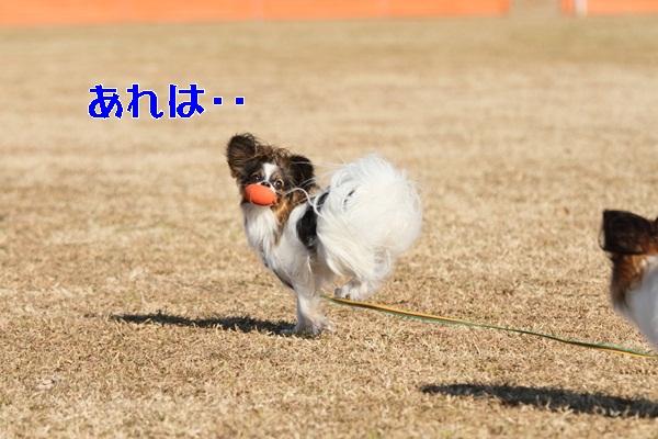 2012_01_06 宇奈根 ブログ用2012_01_06 宇奈根 アルバムDPP_0074