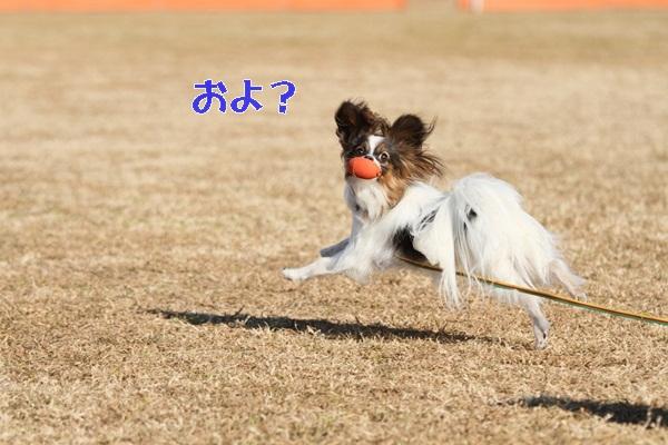 2012_01_06 宇奈根 ブログ用2012_01_06 宇奈根 アルバムDPP_0073