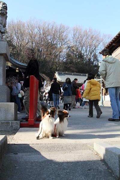 2012_01_09 琴平神社DPP_0008