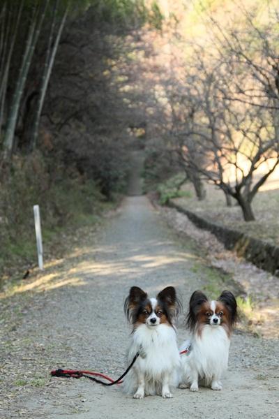 2012_01_09 琴平神社DPP_0012