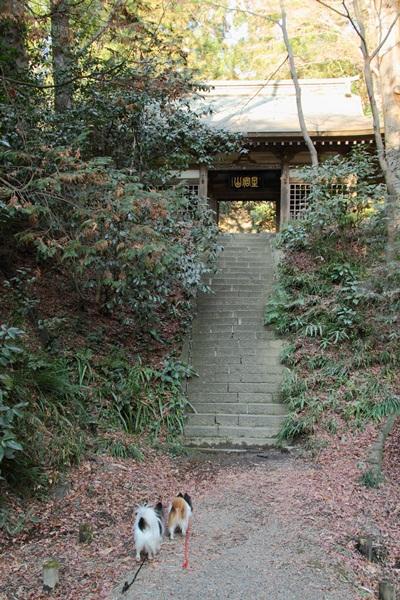 2012_01_09 琴平神社DPP_0015