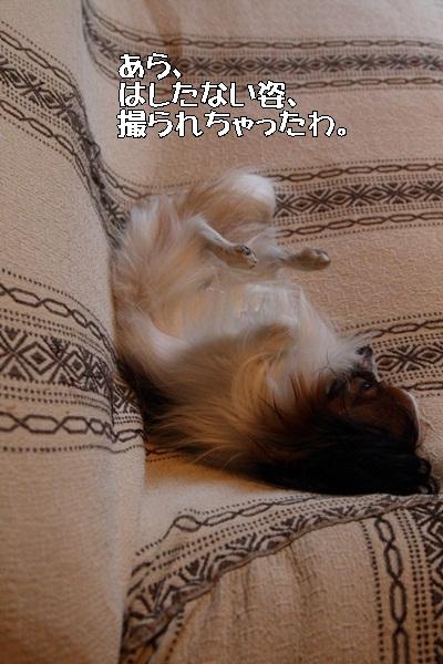2012_01_12 去勢ごDPP_0014
