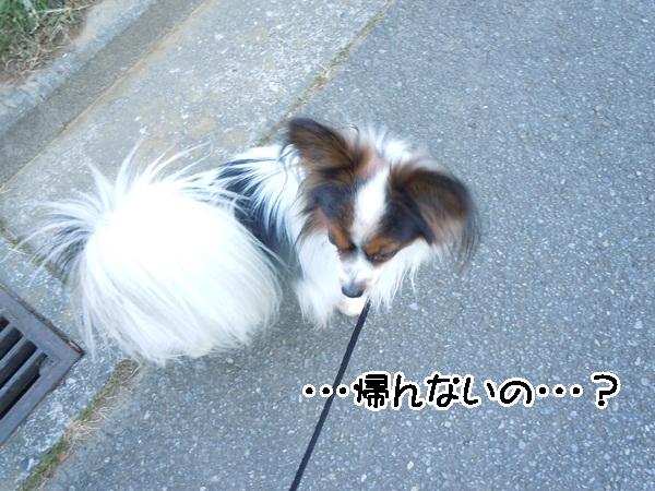 2012_01_13 去勢3日後DSCN1198