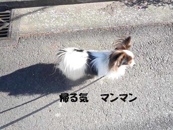 2012_01_13 去勢3日後DSCN1200