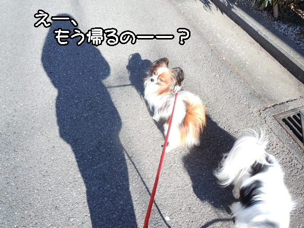 2012_01_13 去勢3日後DSCN1199