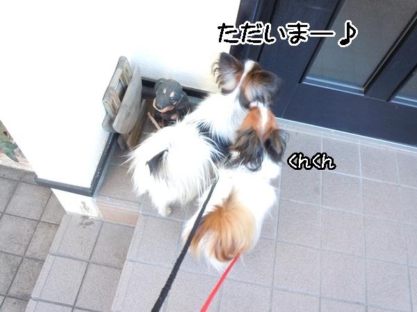 2012_01_13 去勢3日後DSCN1205