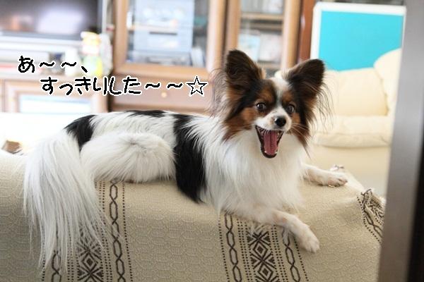 2012_01_13 去勢3日後DPP_0002