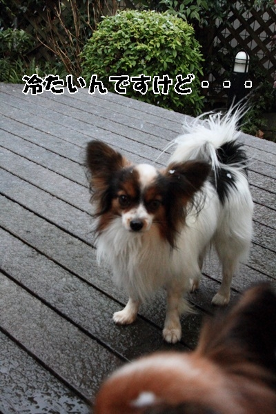 2012_01_20 雪IMG_9599