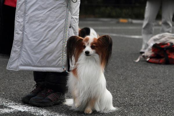 2012_02_05 タイクーンブログサイズ本牧 アルバムサイズ0023