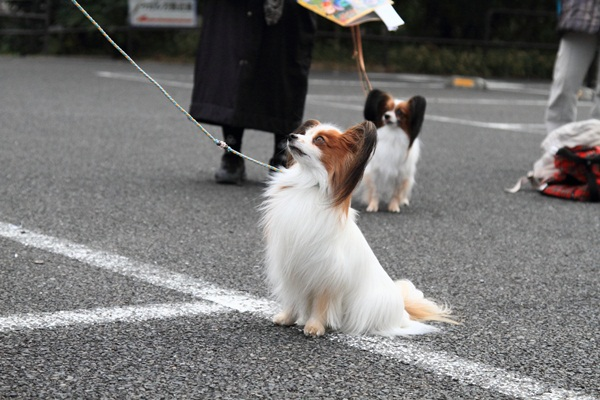 2012_02_05 タイクーンブログサイズ本牧 アルバムサイズ0038