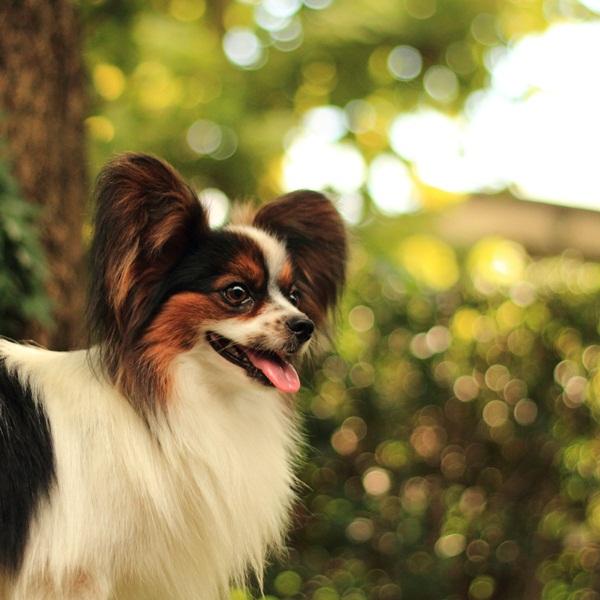 2011_09_12 EOS犬撮影DPP_0206