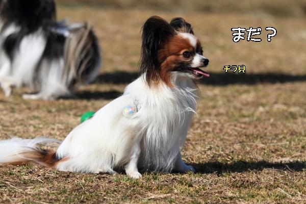 宇奈根ブログサイズ0017
