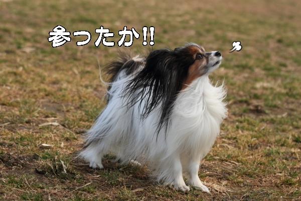 宇奈根ブログサイズ0129