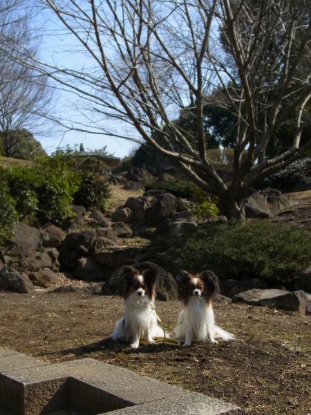ふるさと公園 ブログサイズ0023