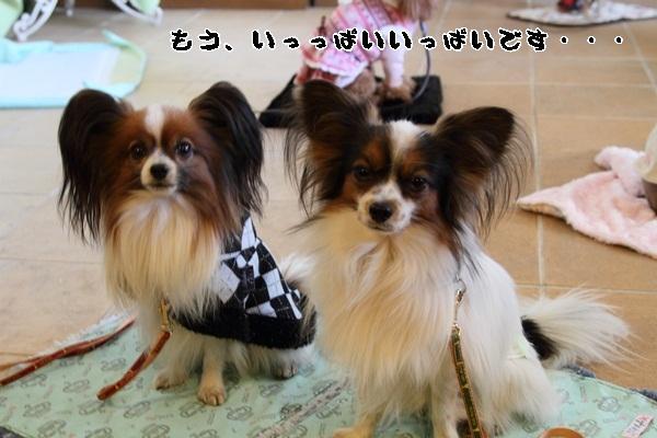 2011_12_27 ヒルサイドガーデンDPP_0033