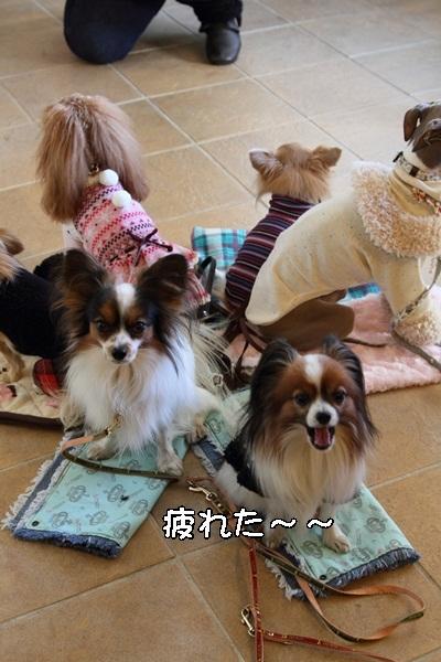 2011_12_27 ヒルサイドガーデンDPP_0040