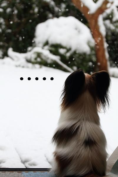 雪 ブログ0017