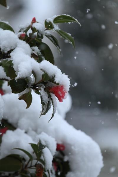 雪 ブログ0002