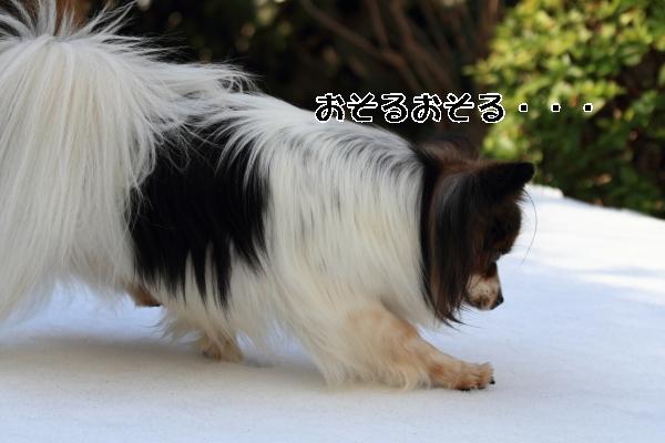 雪翌日ブログ0037