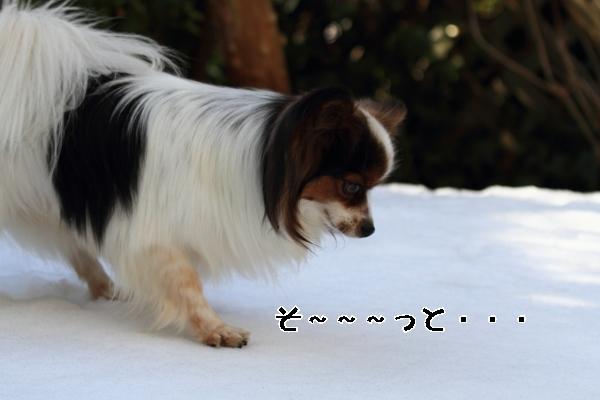 雪翌日ブログ0034