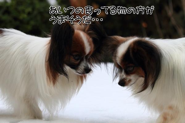 雪翌日ブログ0019