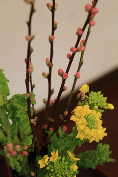桃と菜の花ブログ0024