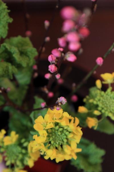 桃と菜の花ブログ0028