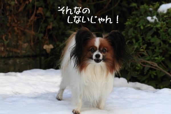 雪翌日ブログ0025