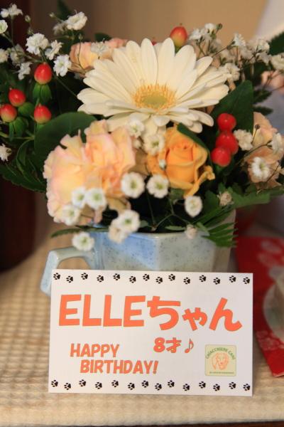 エル お誕生日0008