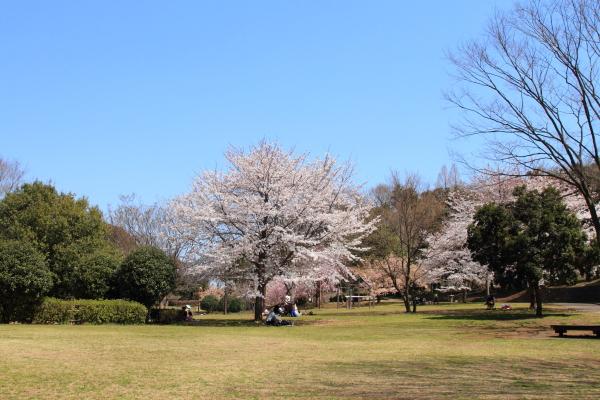 お花見 2012ブログサイズ0056