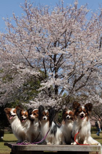 お花見 2012ブログサイズ0049