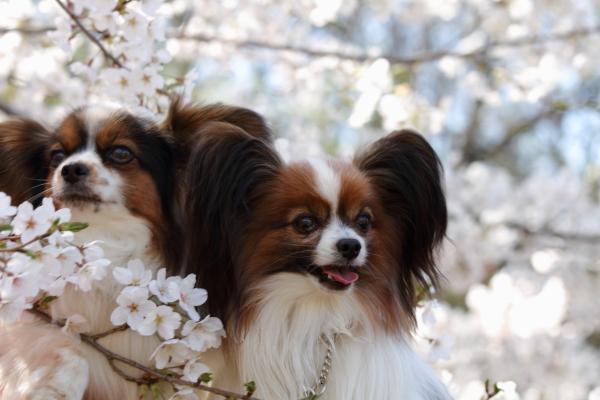 お花見 2012ブログサイズ0040