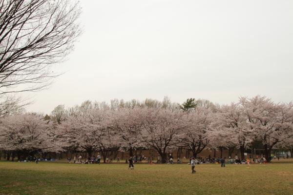 菅生緑地 ブログサイズ0034