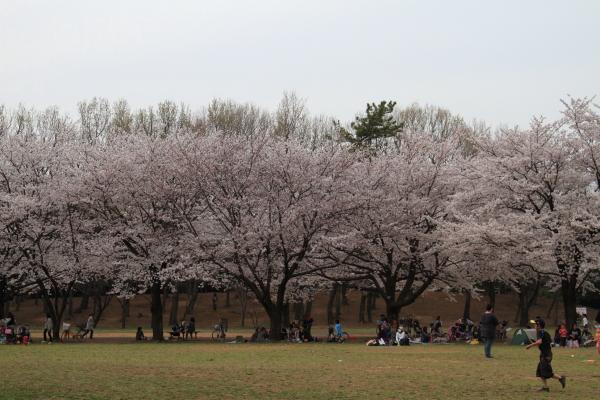 菅生緑地 ブログサイズ0035