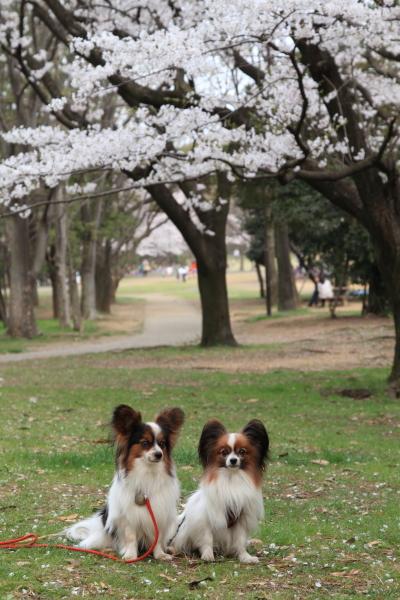 菅生緑地 ブログサイズ0012