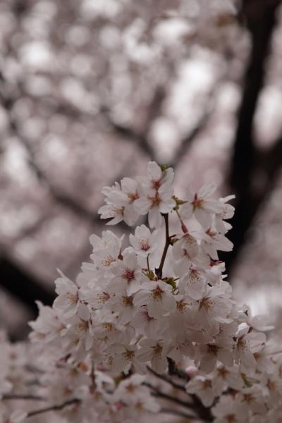 菅生緑地 ブログサイズ0017