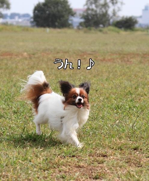 2011_09_30 浄慶寺 彼岸花DPP_0011