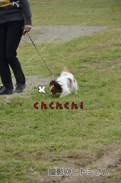 春季競技会 ヒトミさんDSC_4102