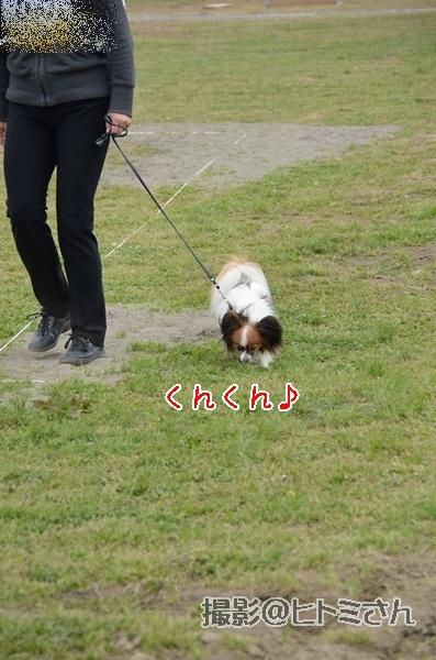 春季競技会 ヒトミさんDSC_4101