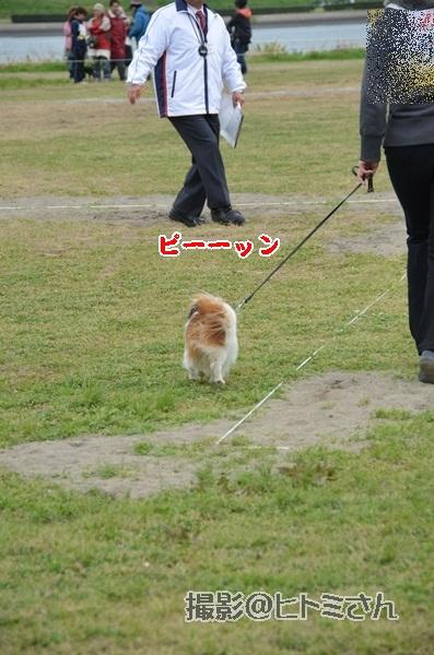 春季競技会 ヒトミさんDSC_4107