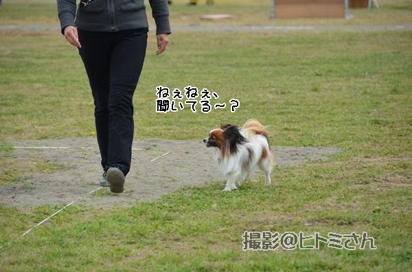 春季競技会 ヒトミさんDSC_4148