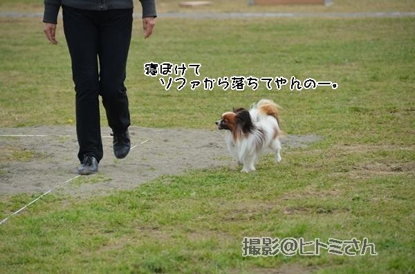 春季競技会 ヒトミさんDSC_4147