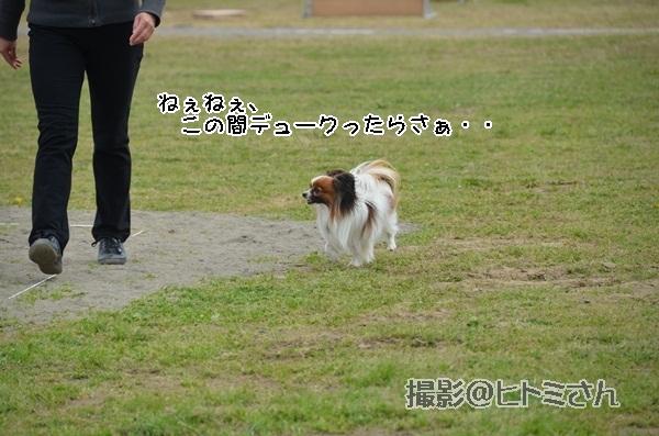 春季競技会 ヒトミさんDSC_4146