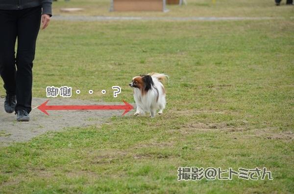 春季競技会 ヒトミさんDSC_4145